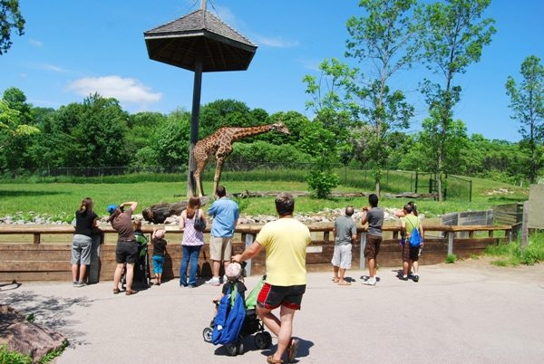 Take a Private Bus to the Toronto Zoo