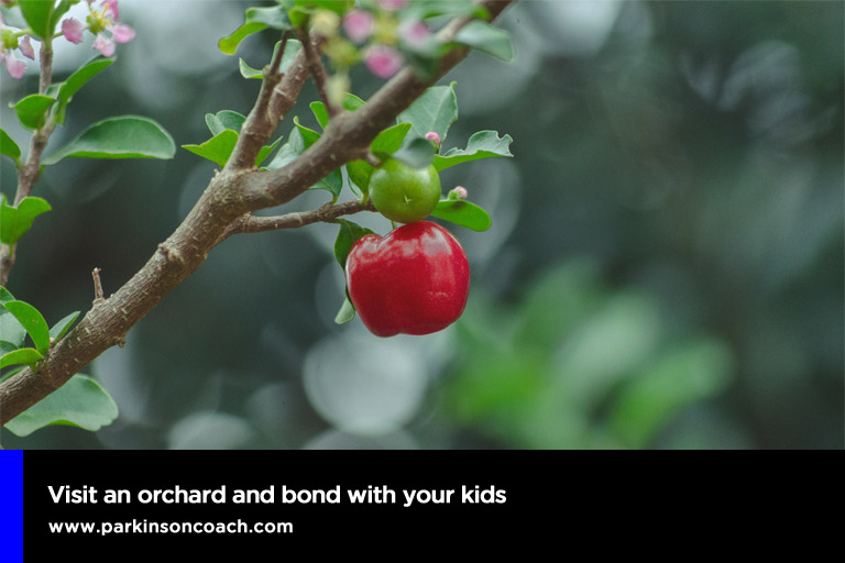 Visit an orchard and bond with your kids