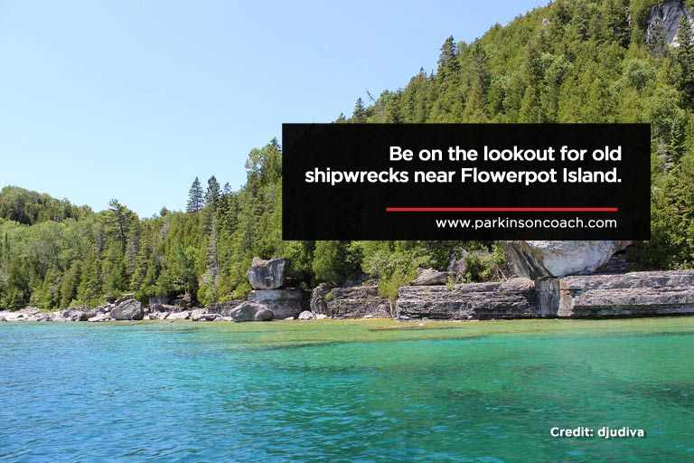 Be on the lookout for old shipwrecks near Flowerpot Island.