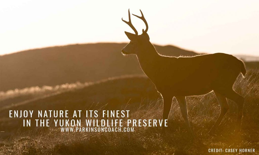 Enjoy nature at its finest in the Yukon Wildlife Preserve