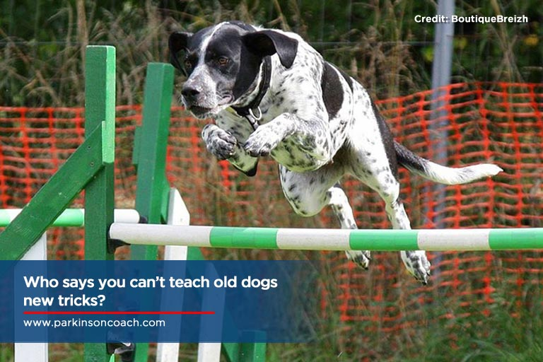 Who says you can't teach old dogs new tricks