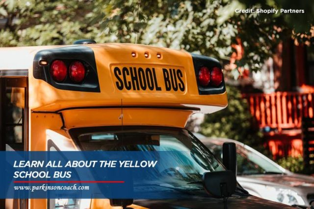 learn all about school bus